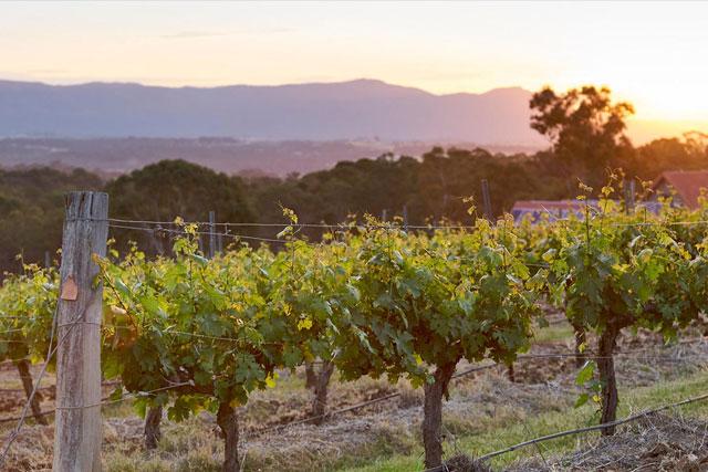 winery1